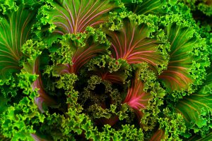 Vitamins For Stress Relief - Vitmain C in Kale