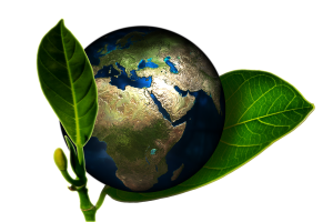 What Is World Environment Day