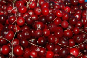 Cranberries For Your Health