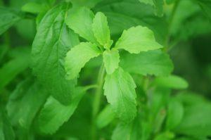 Stevia For Stress