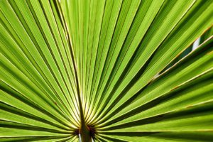 Saw Palmetto For Stress Relief