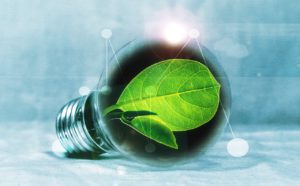 Green Light Bulb and Chlorophyll