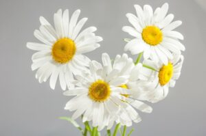 What Is Chamomile Extract? - Help for Stress Relief