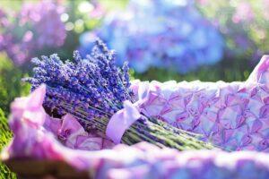 What Is Lavender Tea