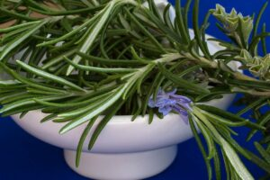 What Is Rosemary Good For