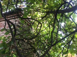 Gardening and Stress
